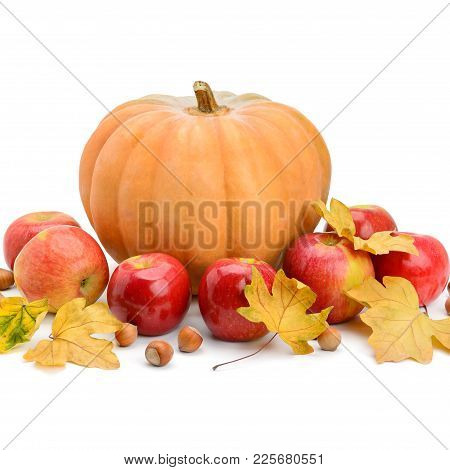 Pumpkin, Apples And Hazel Isolated On White Background. Free Space For Text.