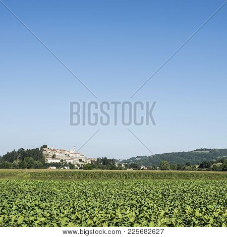 Tobbaco Plantation On The Background Of The Small City Of Monterchi In Eastern Tuscany. Italy Is The