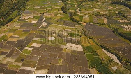 Aerial View Farmlands, Rice Terrace Field In The Mountains, Agricultural Land Of Farmers.