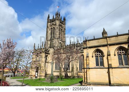 Manchester, Uk - Anglican Cathedral. Spring Time Cherry Blossom. City In North West England. Grade I