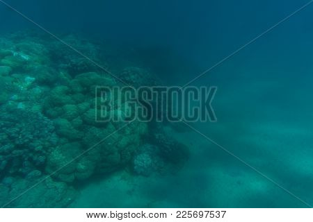 Beautiful Seabed Background, Gorgeous Sea Bottom Through Transparent Blue Water, Majestic Marine Lif