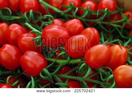 Close Up Fresh Red Cherry Tomatoes On Green Branch At Retail Display Of Farmers Market, Low Angle Vi