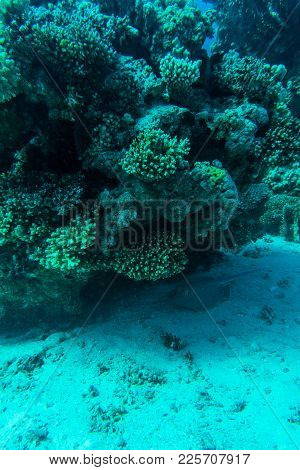Coral Reef With Soft And Hard Corals And Exotic Fishes Anthias In Tropical Sea On Blue Water Backgro