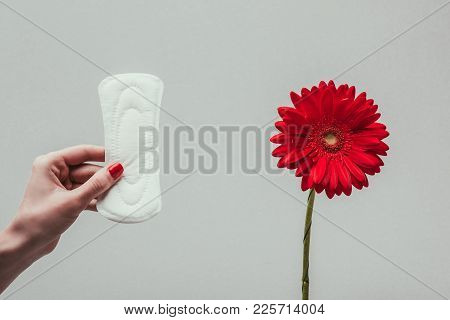 Partial View Of Woman Holding Menstrual Pad In Hand With Flower Near By Isolated On Grey