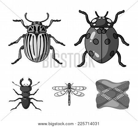 Insect, Bug, Beetle, Paw .insects Set Collection Icons In Monochrome Style Vector Symbol Stock Illus