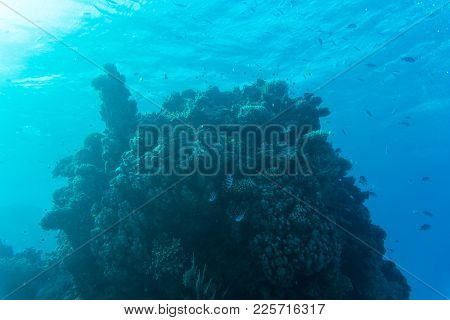 Young Coral Reef Formation On Sandy Sea Bottom. Deep Blue Sea Perspective View With Clean Water And