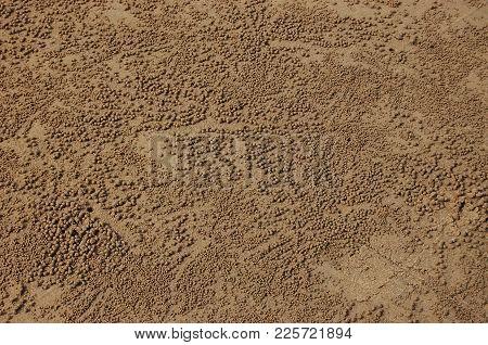 Beach Crabs On Coast Of Fraser Island , Australia