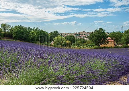Panoramic View Of Lavender Fields Under Sunny Blue Sky And The Town Of Valensole In The Background.