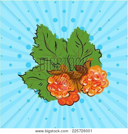 Ripe Cloudberry With Yellow Orange Berries On Blue Background, Lines, Dots. Vector Illustration. Han