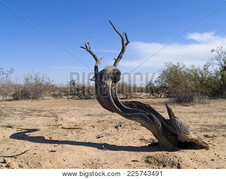The Remains Of A Dead Tree In The Arizona Desert.