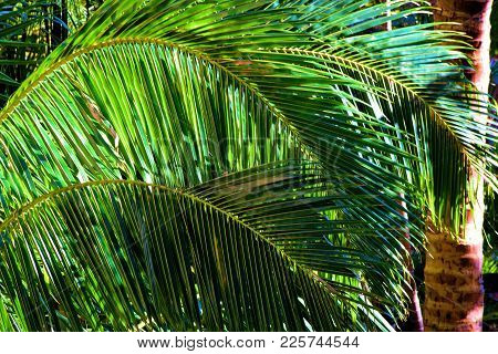 Tropical Landscaping Including Palm Trees With Large Branches And Leaves Taken At A Garden In A Resi