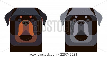 Colored And Gray Rottweiler Portrait In Geometric Style On White Background