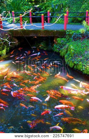 Koi Meditation Garden Including A Bridge Over A Creek Stocked With Koi Fish Surrounded By Lush Green