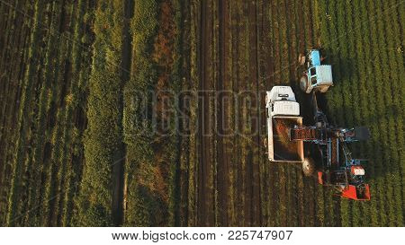 Mechanized Carrot Harvesting.erial View.machine Harvesting Carrots Moves Across The Field And Loads