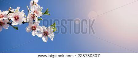 Spring, Springtime - Pink Flowers Banner