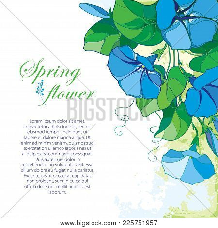 Vector Corner Bouquet With Outline Blue Ipomoea Or Morning Glory Flower, Green Leaf And Bud On The P