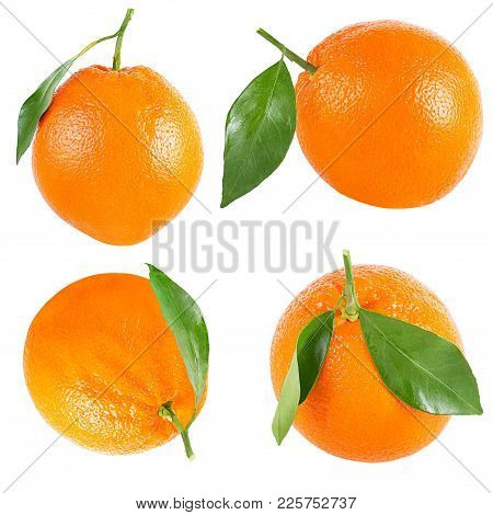 Isolated Oranges. Collection Of Whole Orange With Leaf Isolated On White Background With Clipping Pa