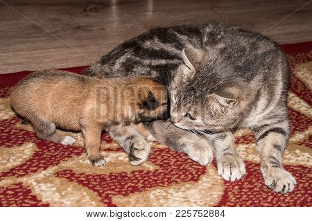Cat, Resting Cat With Dog, Cute Funny Cat Close Up, Domestic Cat, Relaxing Cat, Cat Resting, Cat Pla