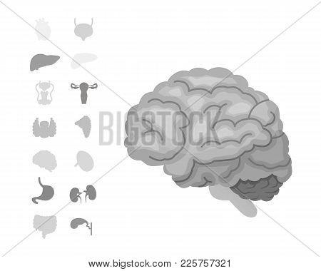 Cartoon Human Organs Vector Set . Anatomy Of Body. Reproductive System, Heart, Lungs, Brain Illustra