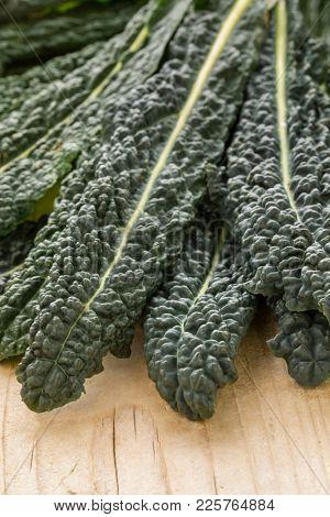 Heap of fresh raw cavolo nero leaves