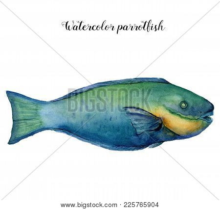 Watercolor Parrotfish. Hand Painted Aquatic Animal Isolated On White Background. Underwater Illustra