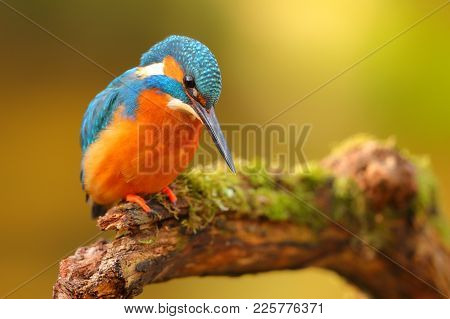Beautiful King Fisher Perched In A Branch With A Colorful Background