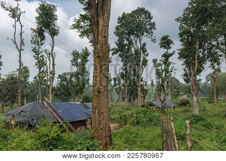 Coorg, India - October 29, 2013: Dubare Elephant Camp. Bamboo And Clay Dwellings With Black Tarps As