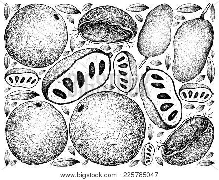 Tropical Fruits, Illustration Background Of Hand Drawn Sketch Fresh Wood Apple Or Limonia Acidissima