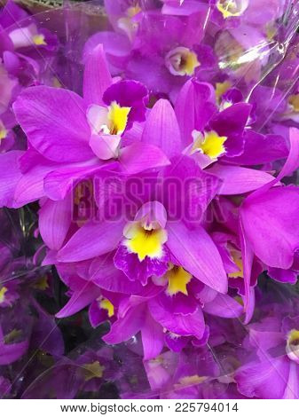 fresh beautiful vivid colorful orchid in nature