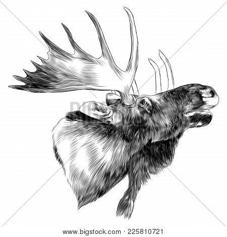 Moose Head Sideways Sketch Vector Graphic Monochrome Drawing