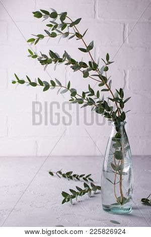 Spring With Morden Herbal Branches Of Eucalyptus In Glass Vase  On Light Background. Home Decor.