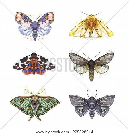 Watercolor Drawing Of Butterflies Shaggy, A Set Of Butterflies, Dipper Reddish, Yellow Bear, Peacock