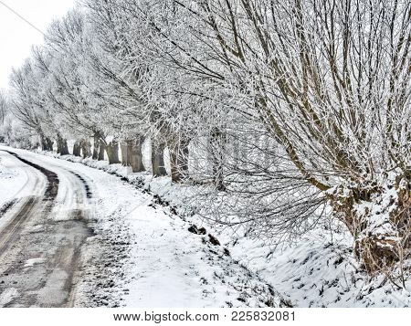 Old country road with willow trees in winter cover