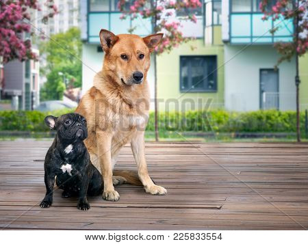 Two Completely Different Dogs Sitting In The Background Of The New Houses Of The Residential Quarter
