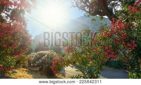 Beautiful Background With Red Flowers Illuminated By Sun In A Daytime In Corfu Island, Greece