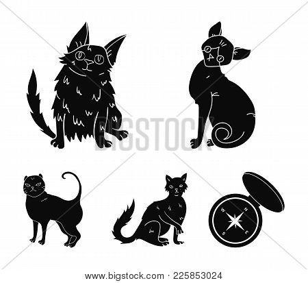 Turkish Angora, British Longhair And Other Species. Cat Breeds Set Collection Icons In Black Style V