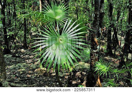Palm Leaf. Bright Evergreen Vegetation. Magnificent Tropical Vegetation Decorates South Park.