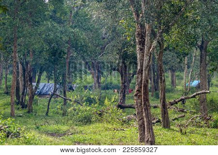 Coorg, India - October 29, 2013: Dubare Elephant Camp. Tribal Dwellings Hidden In Jungle Are Bamboo-