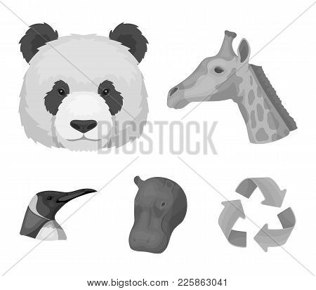 Panda, Giraffe, Hippopotamus, Penguin, Realistic Animals Set Collection Icons In Monochrome Style Ve