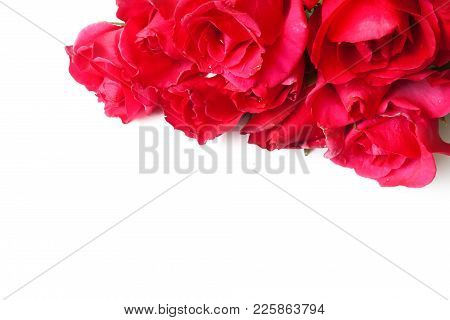Red Rose Isolated On White Background For Valentine .