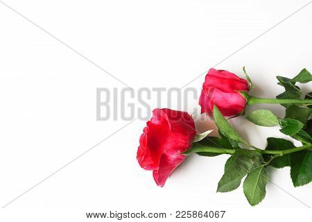 Red Rose Isolated On White Background For Valentine.