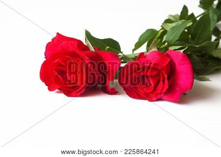Red Rose Isolated On White Background Valentine.