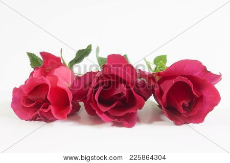 Red Rose Isolated On White Background Valentine