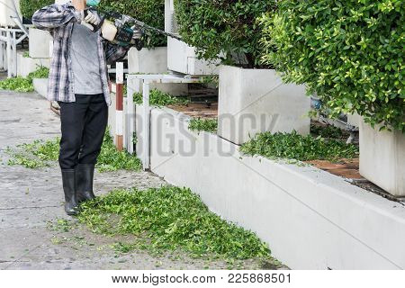 Trimming Time., Gardener With His Gasoline Hedge Trimmer In Action., Gardener Trimming Bushes.