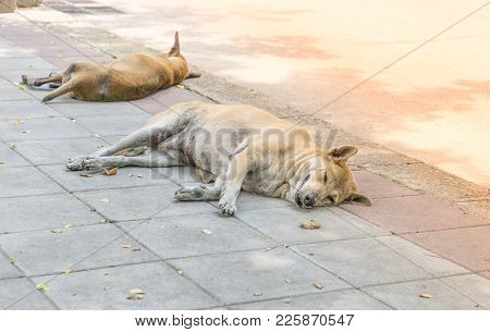 Lonely Homeless Dog Sleeping On The Sidewalk., Stray Dogs Sleep On The Floor. Lonely Concept. Alone