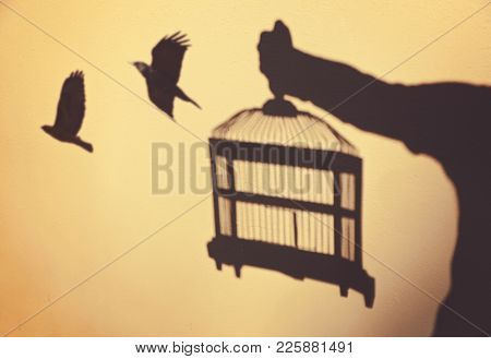 surreal concept being set free with birds flying out of a cage held by a person as shadows on a wall toned with a retro vintage instagram filter