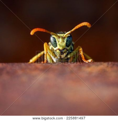 extreme macro close up of a hornet on a metal rail of a bridge on a hot summer day at sunset with warm lighting