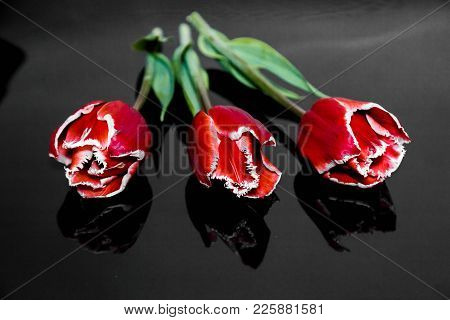 Three Flowers Of A Red Tulip Lie On A Black Mirror Background