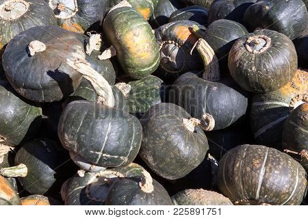 Halloween Green Pumpkin Pile At A Farm