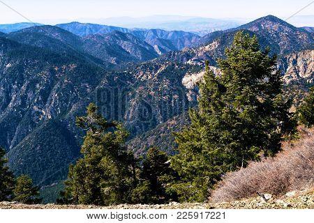 Alpine Pine Forest On An Arid Landscape Taken In The San Gabriel Mountains On Mt Islip, Ca